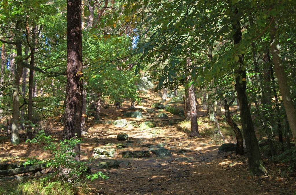 Pfälzer Wald Mountainbike